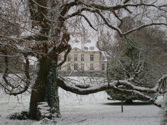 vieil arbre du parc du chateau de Creuse somme