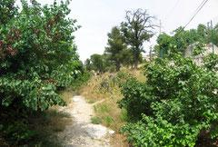 Entrée du parc, vue du chemin sinueux, la bastide ne s'offre à la vue que vers la fin du parcours.