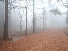 落羽松の落ち葉が美しい霧の八つ橋