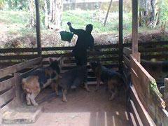 Der Schweinestall