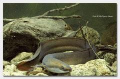 Fisch des Jahres 2009
