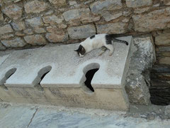 昔のトイレ、猫が便座に寝ていました。