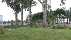 ラボの前の木たち。バキバキに折れています。