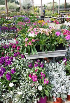 Fleurs offertes à la convoitise des jardiniers (R. Peuron)