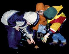 Kleine Krötenretter Foto: Postler