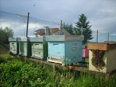 Scorcio di apiario