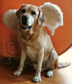 ... damit`s ein Engel  wird