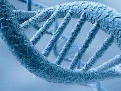 De l'ADN à l'histoire des migrations humaines
