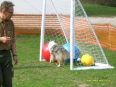 Jan Nijboer, Erfinder vom Treibball