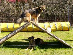 2.Hund na und