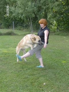 Trick - Dog
