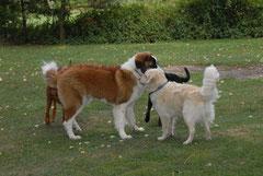 den eigenen Hund besser verstehen