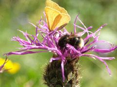 Blume - Schmetterling