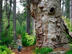 Der Wald für Jung und Alt