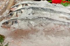 Tiefkühlfisch - Schockgefroren & heißgeliebt