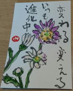 59 小菊