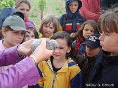 Die 'Kids' betrachten sehr interessiert  einen Steinkauz