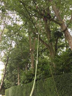 Professionele boomverzorging of vellen van bomen