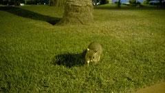 Spielt fast in der gleichen Niedlichkeitskategorie wie der Koala: das Possum