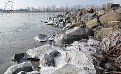 Der Rhein im März