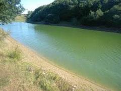 Un cours d'eau pollué par les cyanobactéries ou algues bleues danger pour le chien par Coach canin 16 éducateur canin Angoulême