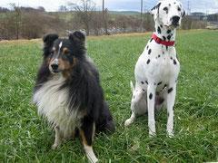 Sharang und Diva, zwei aktive Agi-Hunde
