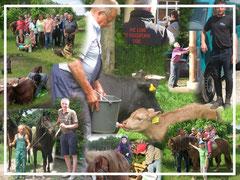 Pferdehof Leue, Familienbetrieb