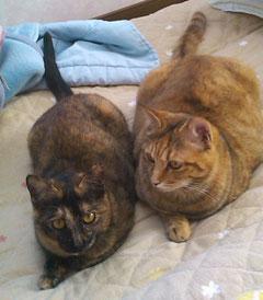 さすが姉妹猫さんそっくりやね〜♡