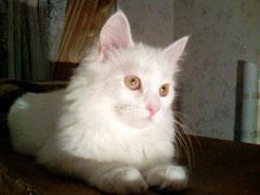 Леди Гамильтон (10 месяцев) TUA