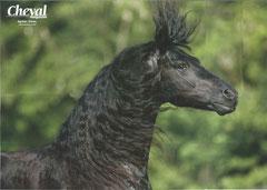 Der Hengst Agelan von unserem Mitglied Cordula Wedlich ist als Riesen-Posterbeilage in der französichen Pferdezeitschrift Cheval Magazine Juli 2011!