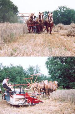 Lieuse à 3 chevaux de front