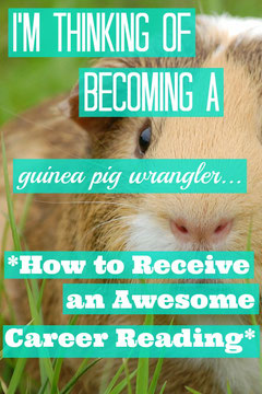 I'm Thinking of Becoming a Guinea Pig Wrangler...