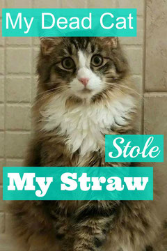My Dead Cat Stole My Straw