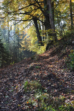 Der Odenwald bei Radheim