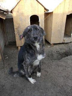 Max aus Rumänien