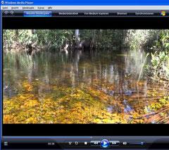 Wasserpflanzen Rio Negro