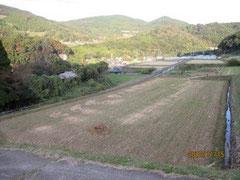 竹を片付け藁と堆肥が残る田圃。