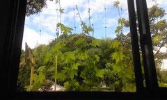 ▲ 事務所の窓