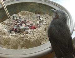 火鉢で暖を取る