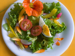 pflanzenbasierte Kost