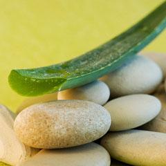 Aloe vera - Alleskönnerin