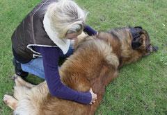 Dorn Breuss für Hunde