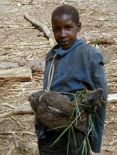 Ragazzo Ogiek  con una cattura fortunata: ...un hyrax