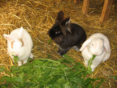Whitey + Rudi + Ginger