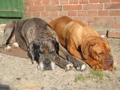 Pepper + Gina beim Sonnenbad !