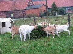 Adieu Weihnachtsbaum *g* !