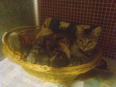 La mamma con 3 dei 4 piccoli, uno è scappato :-(