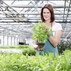 Pflanzen & Saatgut