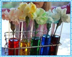 Разноцветные гвоздики