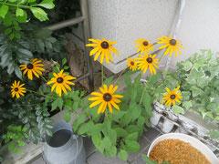 ソラシド前の花です。本文とは関係ありません(笑)